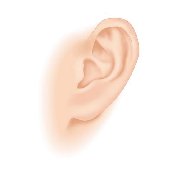男性セラピスト 耳ツボマッサージ